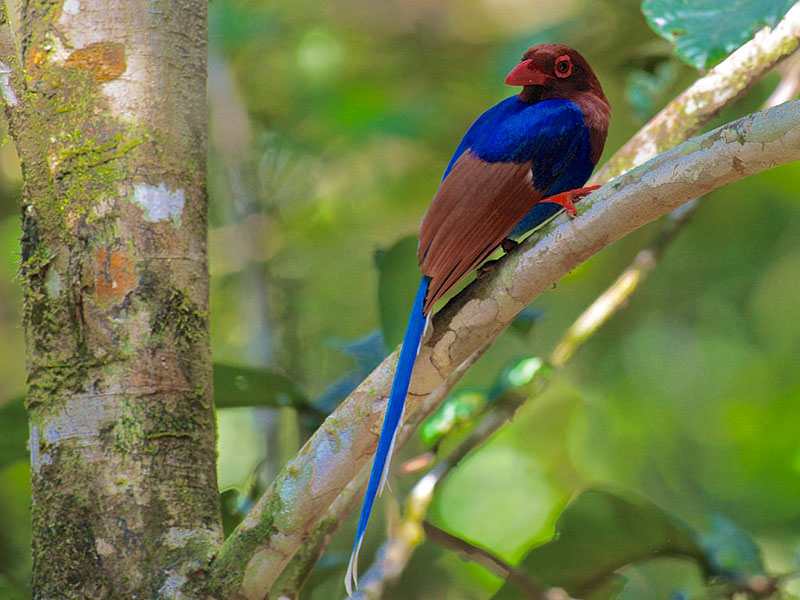 Things to do in Sinharaja Rain Forest - Top travel experiences in Sinharaja Rain Forest - Best Things to do in Sinharaja Rain Forest - Bird Watching Trips in Sinharaja, Sri Lanka - Bird Watching in Sinharaja Rainforest - Birding Trips in Sri Lanka - Sri Lanka Bird Watching Tours