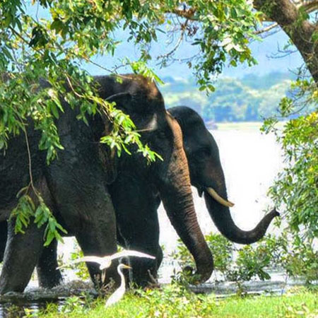 Sri Lanka Wildlife Holidays, Safari Tours Sri Lanka, Wildlife Tours in Sri Lanka, Sri Lanka Safari Tours, Safari Tour packages in Sri Lanka, Safari Holidays in Sri Lanka, Wildlife Holidays Sri Lanka, Sri Lanka safari and wildlife Tours and Holidays in Sri Lanka
