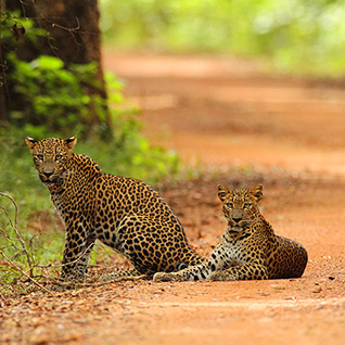 Wildlife Safari Tours Sri Lanka - Sri Lanka Wildlife Tours - Safari and Wildlife Sri Lanka Tours