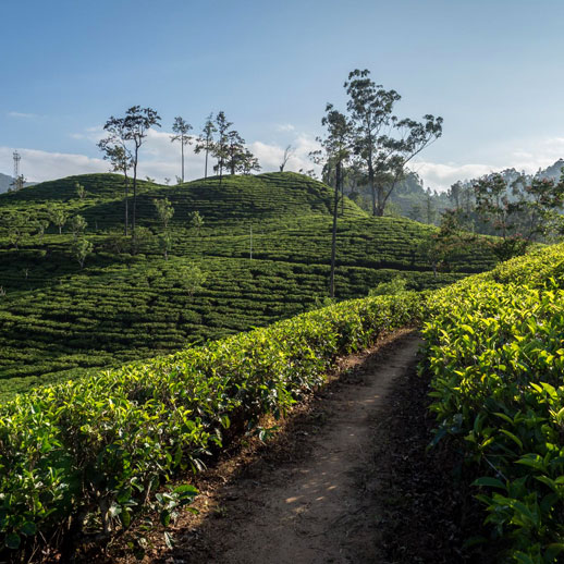 Top travel experiences in Sri Lanka - Authentic experiences in Sri Lanka - Sri Lanka Best Travel Experiences - Best Travel Experiences in Sri Lanka - Sri Lankan Experience - Experiences not to miss in Sri Lanka - Sri Lankan Authentic Experience